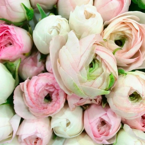Остин с цветами