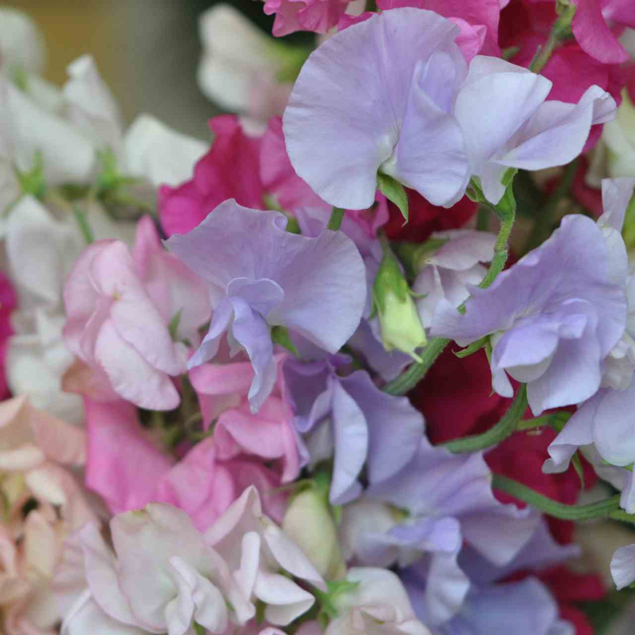 Flowers From You: English Summer Flowers