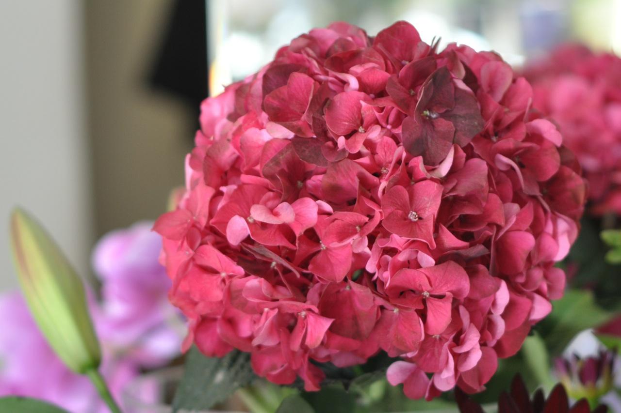 Chelsea London Florist Fresh Hydrangeas Amanda Austin