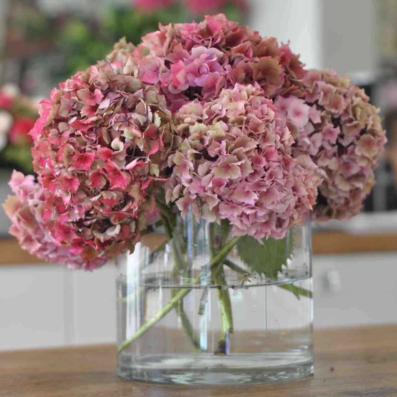 Amanda Austin London Florist Seasonal Flowers Hydrangeas